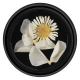 Flori Uscate Unghii LUXORISE Blossom #08