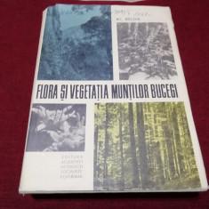 AL BELDIE - FLORA SI VEGETATIA MUNTILOR BUCEGI