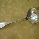 Lingurita englezeasca argintata