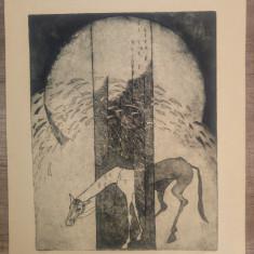 Calul// gravura in doua culori
