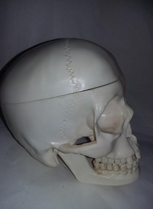 CRANIU UMAN cu dantura ,mandibula mobila,ochi-calota craniana taiata,T.GRATUIT