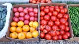 Rasad de rosii / tomate si alte rasaduri legume