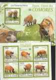 Fauna ,mistreti ,Comore.