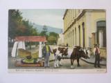 Carte postala Insulele Madeira-Funchal,car cu boi,circulată 1910