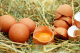 Ouă de casă