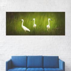 Tablou Canvas, Trei Berze pe Iarba - 70 x 175 cm
